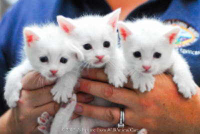 kittens small image