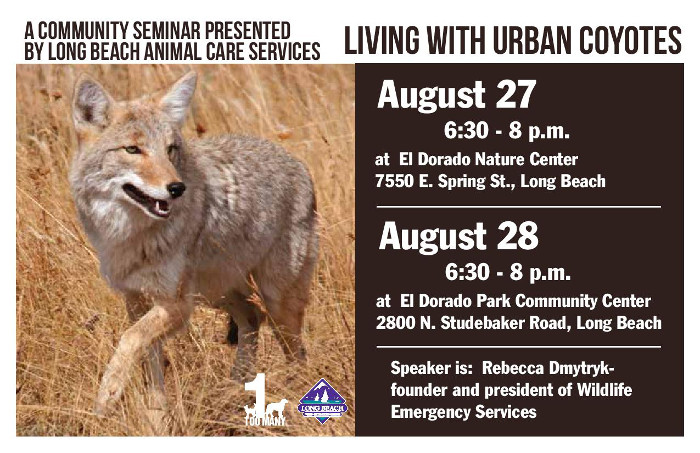 Living with Urban Coyotes small