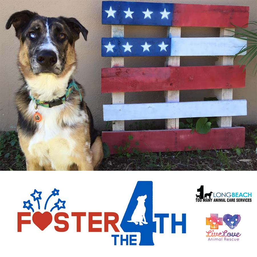 Foster the 4th social