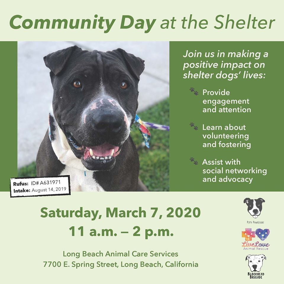 Community Day at the Shelter