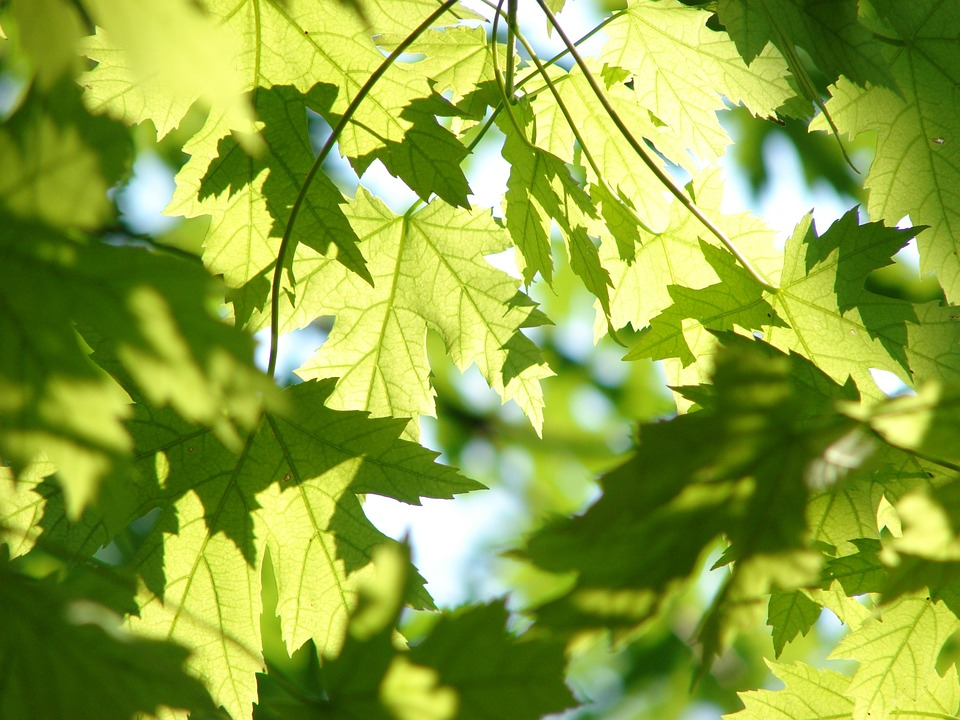 & Urban Tree Canopy Assessment and Management Plan
