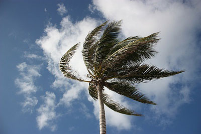 Palm Tree in the Wind Stock Image