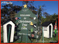 Christmas Tree Lane Welcome Sign Image, No Link Attached
