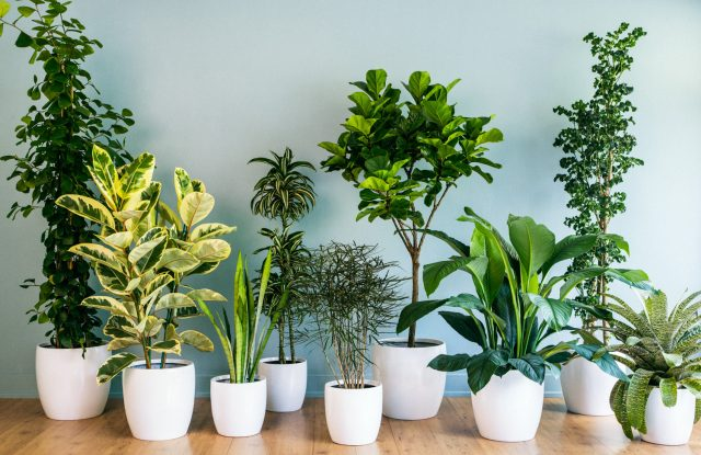 Gardening Series: Indoor Plants